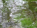 Grass Under Water